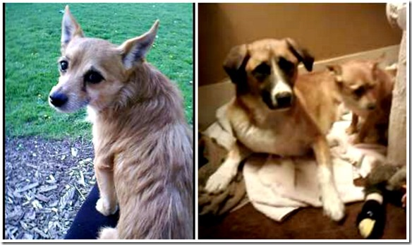 rescue dogs1