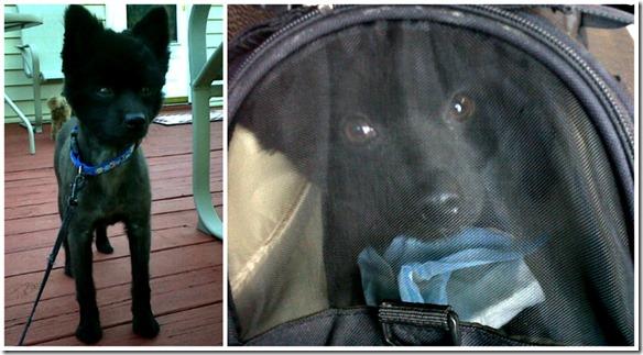 rescue dogs2