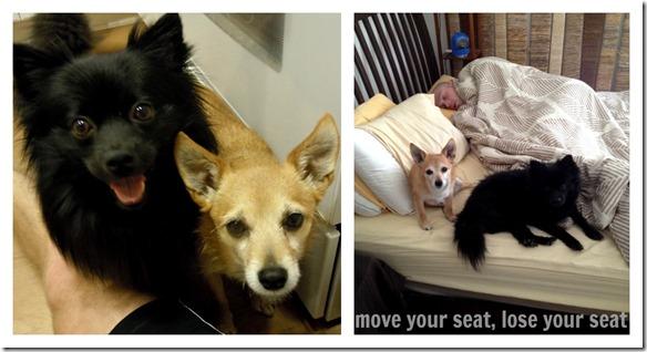 rescue dogs5
